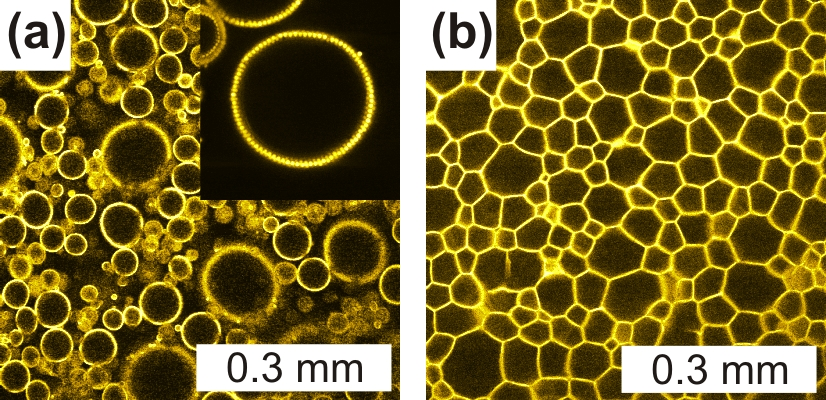 Confocal micrographs of water-in-oil emulsions stabilized by micron-sized PMMA particles (yellow): (a) before and (b) after centrifugation.