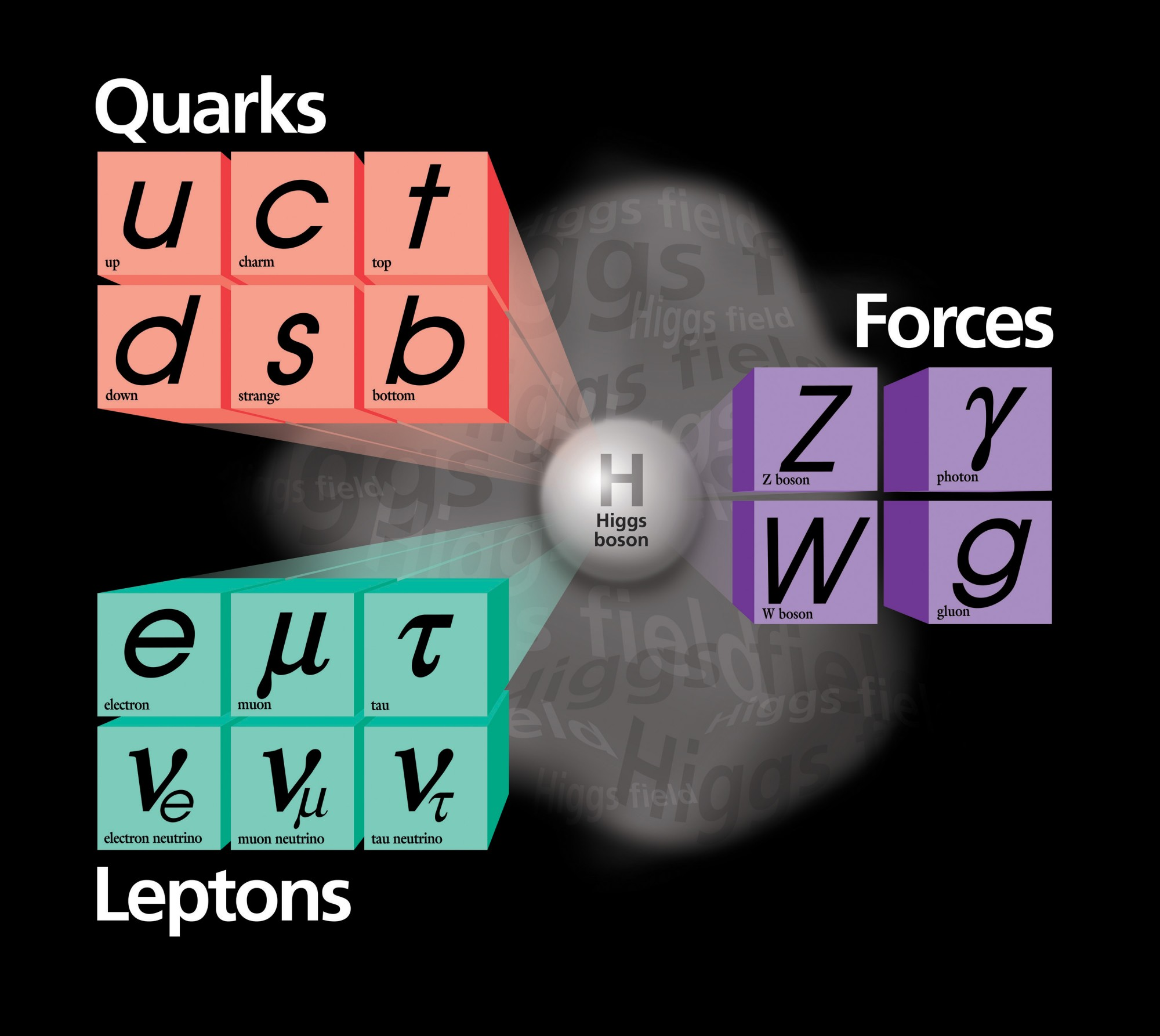 The Higgs boson will decay into a pair of any of these particles.  These different decay products are more of less likely.